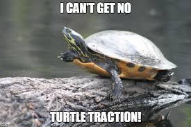 Turtle Meme - turtle traction imgflip