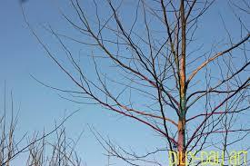 dilly dali art the rainbow tree