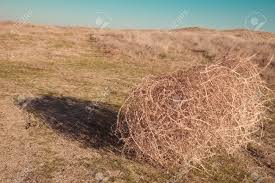 tumbleweed on the field stock photo picture and royalty free
