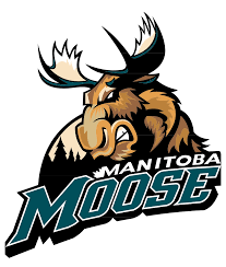 manitoba moose wikipedia
