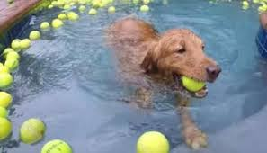 dog swimming pool paradise for dogs animal lovers center