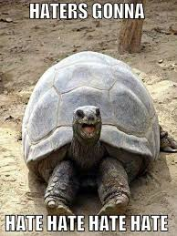Turtle Meme - how do tortoises and turtles live for so long science abc
