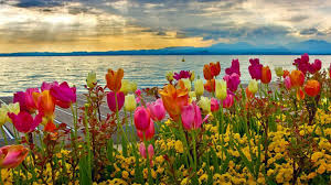 colorful flower gardens flower colorful tulips flowers sunset lake colors sky pink water