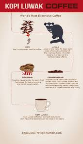 best 25 types of coffee beans ideas on pinterest coffee bean