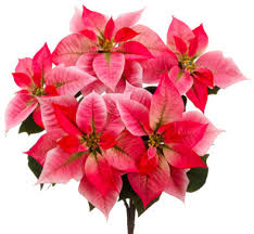 silk plants direct poinsettia bush pack of 12 traditional