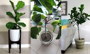 home project pots for indoor plants within the grove