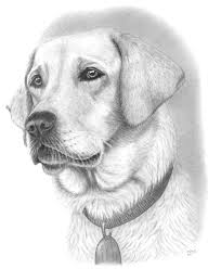 how to draw a cute dog easy how to draw a dog and her litle pups