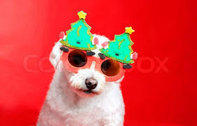 christmas glasses a small white dog wearing christmas decoration glasses stock
