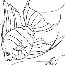 fish anatomy coloring kids drawing coloring pages