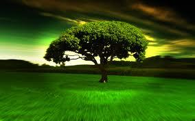 cool trees cool tree wallpaper