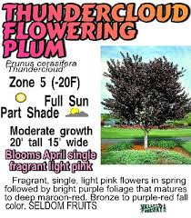 37 best my garden s tree s shrub s images on