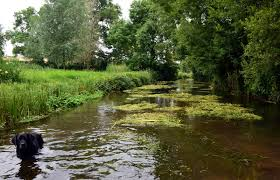 diary of a riverkeeper on the river test hampshire