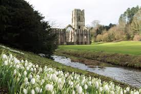 top national trust gardens where to see snowdrops
