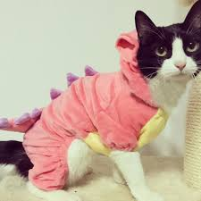 halloween costumes kitty cat 10 cat halloween costumes that are so cute they u0027re scary