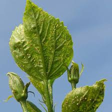Plants That Repel Aphids by Stop Aphids In Your Garden