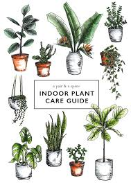indoor plans how to care for indoor plants a pair a spare