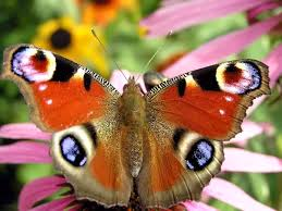 what does the word for butterfly in your language actually