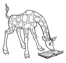 seeing giraffes books giraffes pinterest giraffe
