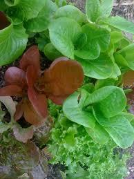 free clinic u2013 spring organic gardening in texas u2013 bohemian bounty