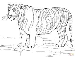 tiger coloring page glum me