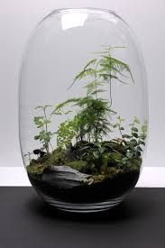 captive creativity terrarium love