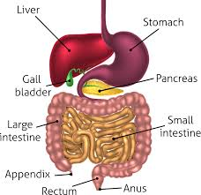 gut feeling how your microbiota affects your mood sleep and the gastrointestinal tract christos georghiou shutterstock