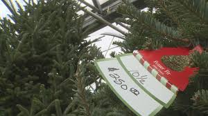 christmas tree shortage could increase prices