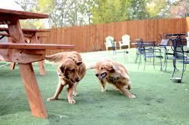the ten best dog friendly patios in denver westword