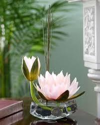 Lotus Flower In Muddy Water - 135 best water lilies u0026 lotus flowers images on pinterest nature