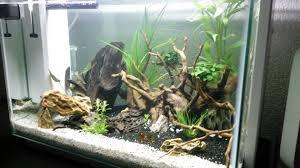Home Aquarium by First Aquarium Aquascaping Superfish Home 60 Youtube