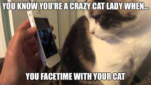 Crazy Cat Lady Memes - image tagged in facetime cat imgflip