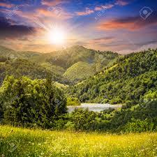 Flowers Near Me - composite mountain summer landscape pine trees on hillside meadow