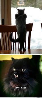 Dat Ass Cat Meme - cat dat ass by dman1000 meme center