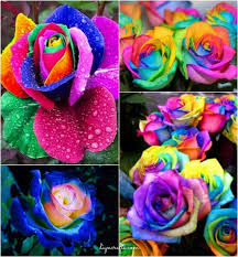 colorful roses how to diy colorful rainbow roses step by step