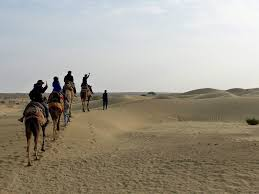 thar desert animals a camel ride and a night under the stars in the thar desert india