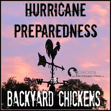 the chicken hurricane preparedness for backyard chickens