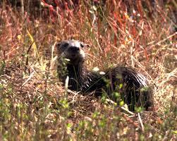 Indiana Wildlife images Muscatatuck national wildlife refuge an indiana national wildlife jpg