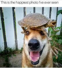 Best 25 Spider Meme Ideas - best 25 good day meme ideas on pinterest jokes for the day nec