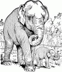 animal funny elephant coloring pages elephant coloring pages animals