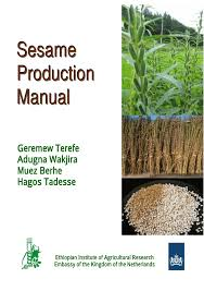 sesame production manual pdf download available
