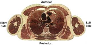 Neck Cross Sectional Anatomy The Cross Sectional Plane