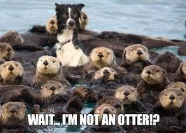 Otter Memes - i m not an otter memes and comics