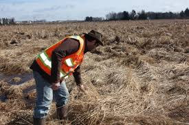 plants native to wisconsin wetland restoration as a business wisconsin u0027s growing mitigation