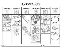 parts of a plant we eat plants and kindergarten