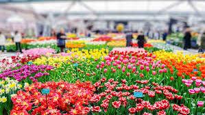 keukenhof gardens netherlands book tickets u0026 tours getyourguide