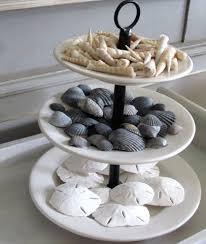Where To Buy Sand Dollars Best 25 Seashell Display Ideas On Pinterest Display Sea Shells