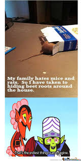 Mouse Memes - mice memes best collection of funny mice pictures