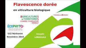 chambre d agriculture 34 conférence sur la flavescence dorée narbonne 3 nov 2015