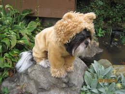 the most popular dog costumes popsugar pets 74 best pet halloween costumes images on pinterest animals pet