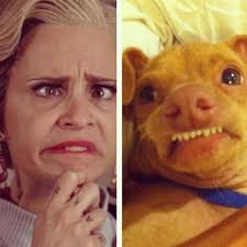 Tuna The Dog Meme - lul phteven tuna the dog know your meme